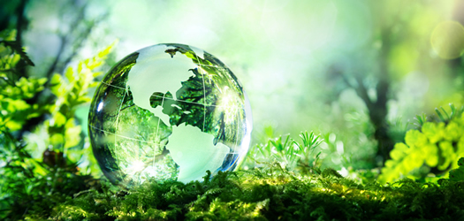 Environmental Management & Sustainability